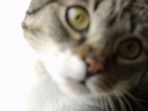 hexenkatzen(58)