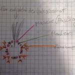sylvis_zeichnung